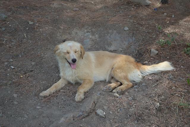 Şahinkaya Kanyonu Köpek